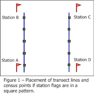 figure showing the placement of transect lines and census points if station flags are in a square pattern