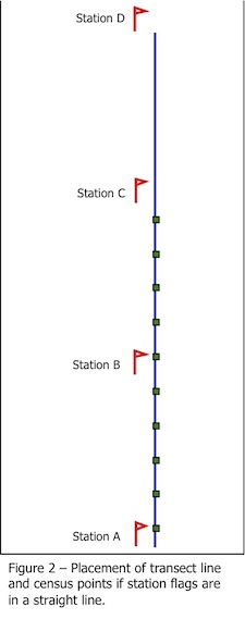 figure showing the placement of transect lines and census points if station flags are in a straight line