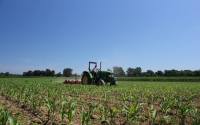 Cultivating organic corn on the KBS LTER Main Cropping System Experiment to control for weeds; Photo Credit: J.E.Doll, Michigan State University
