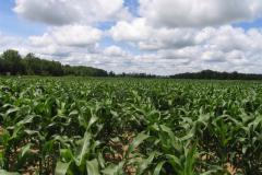 Area Farmscapes