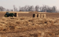 Harvesting the prairie biofuel plots in mid December, part of the KBS / GLBRC cellulosic biofuels experiment. Photo credit: J.E. Doll, Michigan State University