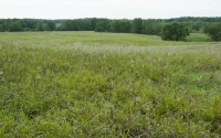 Bromegrass field being studied as part of the GLBRC / KBS LTER biofuels reserach program; Photo Credit: K.Stepnitz, Michigan State University