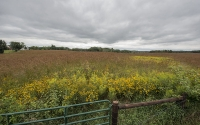 A native prairie field site, part of the KBS LTER/GLBRC biofuels experiment; Photo Credit: K. Stepnitz, Michigan State University