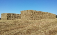 Bales of switchgrass from the KBS LTER / GLBRC biofuels experiment waiting to be transported to MSU's Power Plant; Photo Credit: D. Pennington, Michigan State University Extension