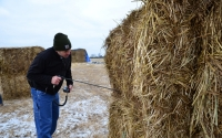 KBS LTER Agronomic Manager Joe Simmons checks the moisture level in bales of switchgrass from the KBS LTER / GLBRC biofuels experiment being loaded for transport to MSU's Power Plant; Photo Credit: B. Krasean, KBS LTER