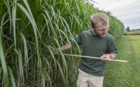 Measuring the length of a Miscanthus leaf, a cellulosic biofuel crop being studied on the KBS LTER/GLBRC biofuels experiment; Photo Credit: K. Stepnitz, Michigan State University