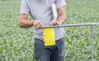 Field technician Dan Hamstra checks insect sticky traps in a soybean field on the KBS LTER; Photo Credit: K. Stepnitz, Michigan State University