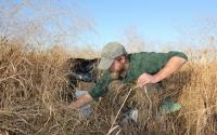 Undergraduate research intern Richard Gaillard samples switchgrass on the KBS LTER; Photo Credit: J.E.Doll, Michigan State University