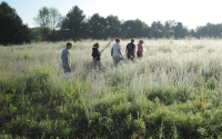 A field crew heads out to sample a native grassland site near KBS as part of the GLBRC / KBS LTER biofuels research program; Photo Credit: C.Baker, Michigan State University