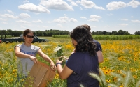 GLBRC / KBS LTER investigator Poonam Jasrotia and field technician RuthAnn Medina collect native plant samples in the GLBRC / KBS LTER biofuels experiment; Photo Credit: J.E.Doll, Michigan State University