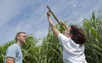 Field technicians Josh Gower and Lucy Carter measure Miscanthus giganteus plants at the GLBRC / KBS LTER biofuels research sitePhoto Credit: K.Stepnitz, Michigan State University