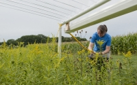 Site manager Stacey Vanderwulp adjusts drainage lines of a rainout shelter designed to simulate drought on a part of the KBS LTER Main Cropping System Experiment; Photo Credit: K.Stepnitz, Michigan State University
