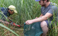 Sampling switchgrass in the switchgrass variety trials
