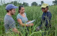 Researcher Carolina Cordova and others observing switchgrass in the switchgrass variety trials