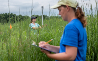 Taking switchgrass measurements at the GLBRC