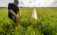 Taking soil cores from the prairie strips