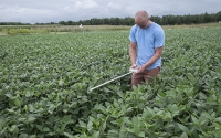 Field technician Rick Corder takes PAR readings over soybeans on the KBS GLBRC; Photo Credit: K. Stepnitz, Michigan State University