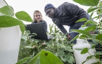 Graduate student Kate Glanville and summer research intern William Davie collect water infiltration data on the KBS LTER Main Cropping Systems Experiment; Photo Credit: K. Stepnitz, Michigan State University