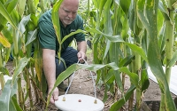 Research technician Kevin Kahmark collects greenhouse gas samples on the KBS LTER/GLBRC biofuels experiment; Photo Credit: K. Stepnitz, Michigan State University