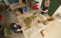 Sorting plant samples in the KBS LTER field lab: K.Stepnitz, Michigan State University