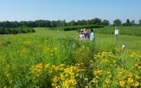 K-12 Partnership teachers and LTER graduate students tour the native prairie biofuel plots; Photo Credit: T.Getty, Michigan State University