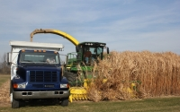 Miscanthus harvest on the GLBRC / KBS LTER biofuels research site; Photo Credit: J.E.Doll, Michigan State University