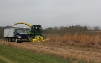 Native grass harvest on the GLBRC / KBS LTER biofuels research site; Photo Credit: J.E.Doll, Michigan State University