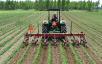 Cultivating organic soybeans on the KBS LTER Main Cropping System Experiment to control for weeds; Photo Credit: KBS LTER
