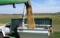 Soybean harvest on the KBS LTER Main Cropping System Experiment; Photo Credit: KBS LTER
