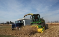 Switchgrass harvest on the GLBRC / KBS LTER biofuels research site; Photo Credit: J.E.Doll, Michigan State University