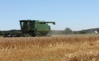 A combine harvests wheat in late July on the KBS LTER Main Cropping Systems Experiment; Photo Credit: J.E. Doll, Michigan State University