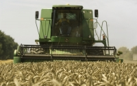 A combine harvests wheat at the KBS LTER site; Photo Credit: G.L.Kohuth, Michigan State University