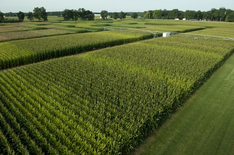Aerial view of the KBS LTER Resource Gradient Experiment examining crop response to different levels of nitrogen fertilizer and water; stripes in crop demonstrate effects of different fertilizer rates; Photo Credit: K.Stepnitz, Michigan State University