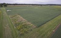 The KBS LTER Main Cropping Systems Experiment in late summer; Photo Credit: K. Stepnitz, Michigan State University