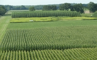 A summer view of the KBS LTER Main Cropping Systems Experiment; Photo Credit: K. Stepnitz, Michigan State University
