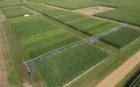 Irrigation corn on the KBS LTER resource gradient experiment; Photo Credit: Kevin Kahmark, Michigan State University.
