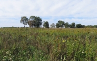 KBS LTER early successional field in October; Photo Credit: J.E.Doll, Michigan State University