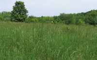 Mid-successional field at the KBS LTER site; Photo Credit: KBS LTER