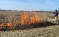 Burning the KBS LTER early successional plots in early spring to control woody species; ; Photo Credit: S.L. VanderWulp, Michigan State University