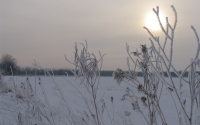 Winter morning in a KBS LTER early successional field; Photo Credit: J.E.Doll, Michigan State University