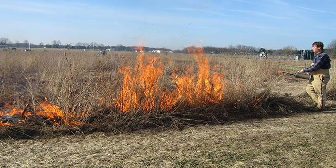 Burning the KBS LTER early successional plots of the Main Cropping System Experiment to control trees; Photo Credit: J.E.Doll, Michigan State University