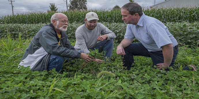 Dean Baas, Josh Dykstra and Neville Millar (left to right) examine and discuss the red clover cover crop in KBS research plots investigating the effects of cover crops on greenhouse gas emissions under conventional and organic management.