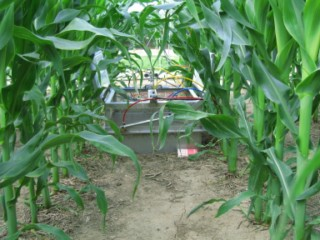 This chamber under the corn canopy measures greenhouse gas fluxes (carbon dioxide, nitrous oxide, and methane) from the plot.