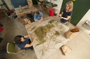 Plant Sorting