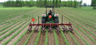 Cultivating soybeans