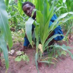 KBS LTER and Malawi partnership addresses food security
