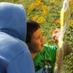 Elementary students count insects on a 'sticky trap' as part of the LTER Student Activity Trail.