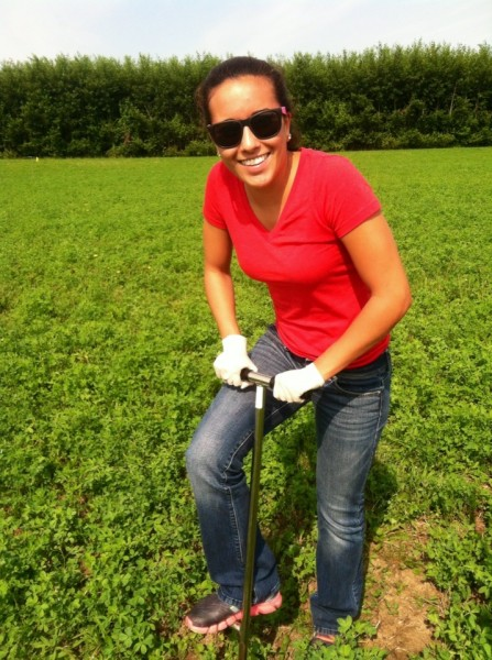 KBS LTER REU Alee Zuniga using a penetrometer to measure soil compaction in an alfalfa plot in the KBS LTER experiment.