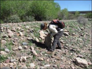 """Scientist Mélanie Banville searching for reptiles in the Central Arizona-Phoenix LTER. Her and Heather Bateman's Data Nugget, """"Lizards, Iguanas, and Snakes! Oh My!"""""""