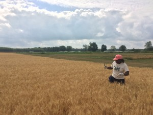 Carlneshia collecting wheat samples from the LTER Resource Gradient Plots.